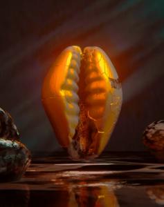 Gold Cowries shells